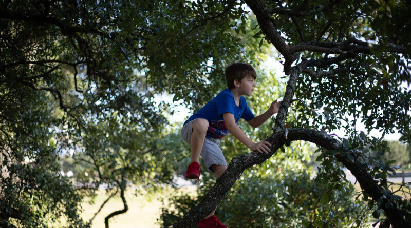 Importance of Trees to Kids