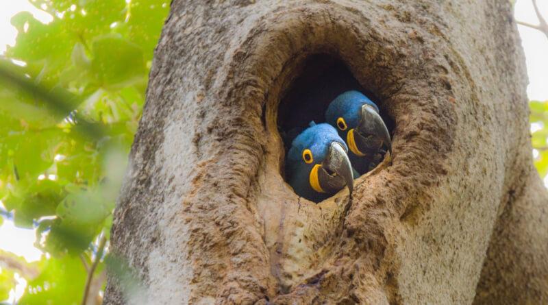 Trees for Habitat