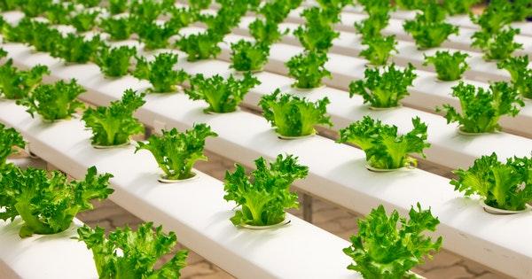 economic importance of plants