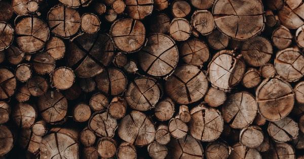 importance of saving trees