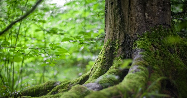 importance of trees on earth